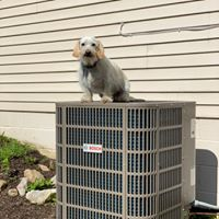 Sonny the HVAC dog on top of HVAC unit being installed to cool a home